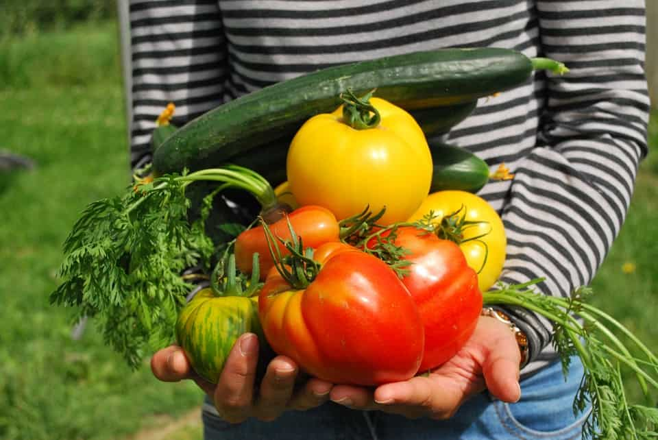 Can A Home Garden Produce Enough Food To Live On?