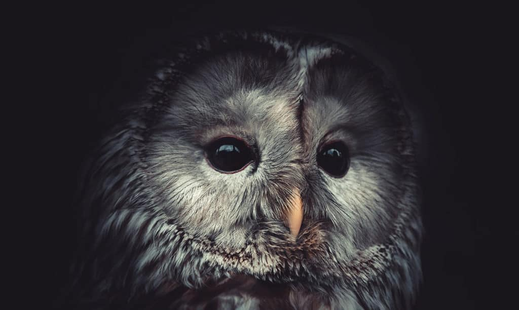 Study Reveals that Night Owls Are More Intelligent Than Early Birds – Awareness Act