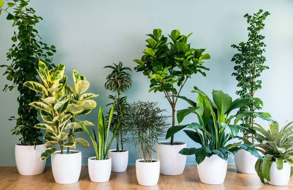 5 Plants That Naturally Purify Your Home Of Harmful Chemicals