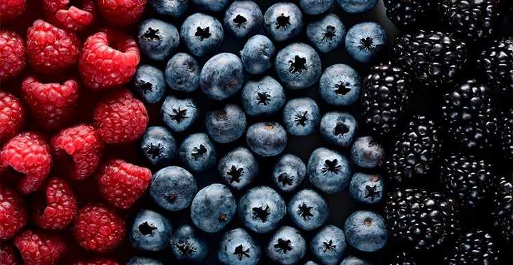 Close-up image of red, blue and black berries which are high in polyphenols