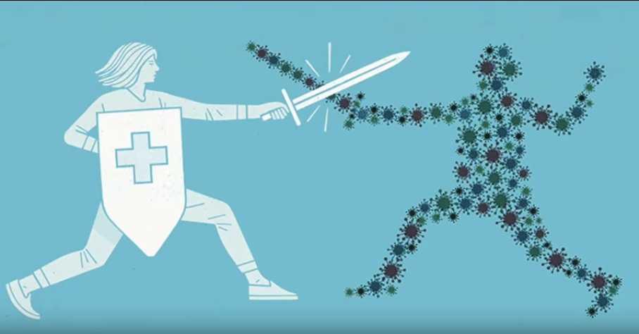 immune system fights a virus