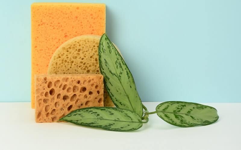 sponge next to a green leaf