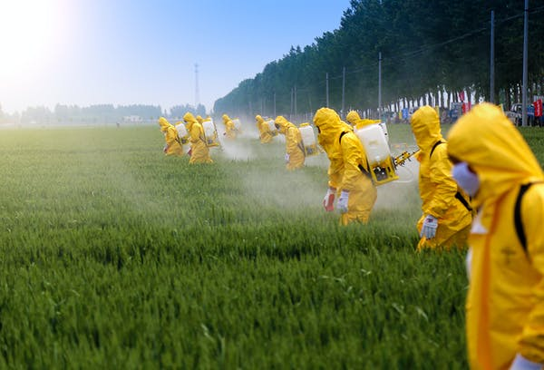 group of people spraying pesticides in a field
